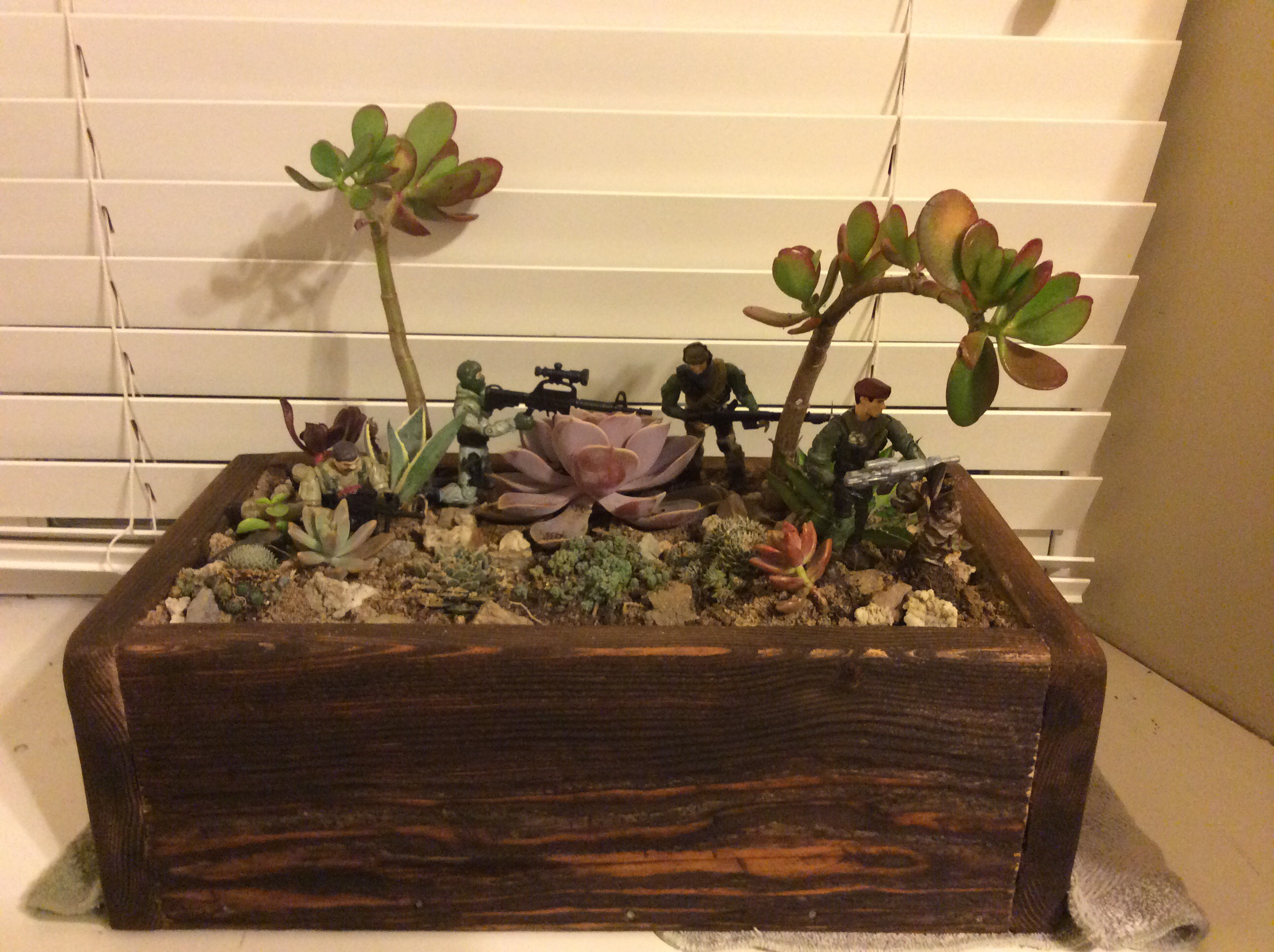 Easy Cheap Cactus Desert Terrarium 10 Steps With Pictures Instructables