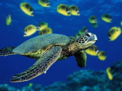 An Undersea Turtle Costume Made Simple