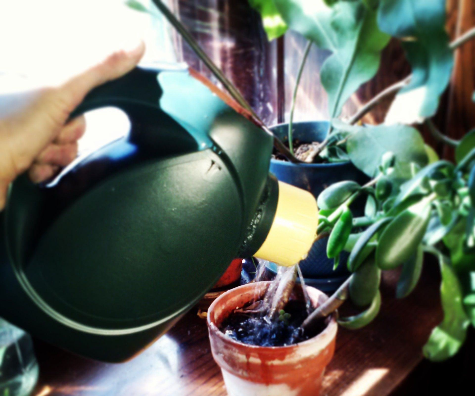 Stylish detergent bottle watering can