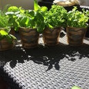 Mother's Day Gift Herb Window Garden for Only 20 $