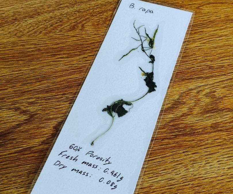 Dorky Botanist Bookmark