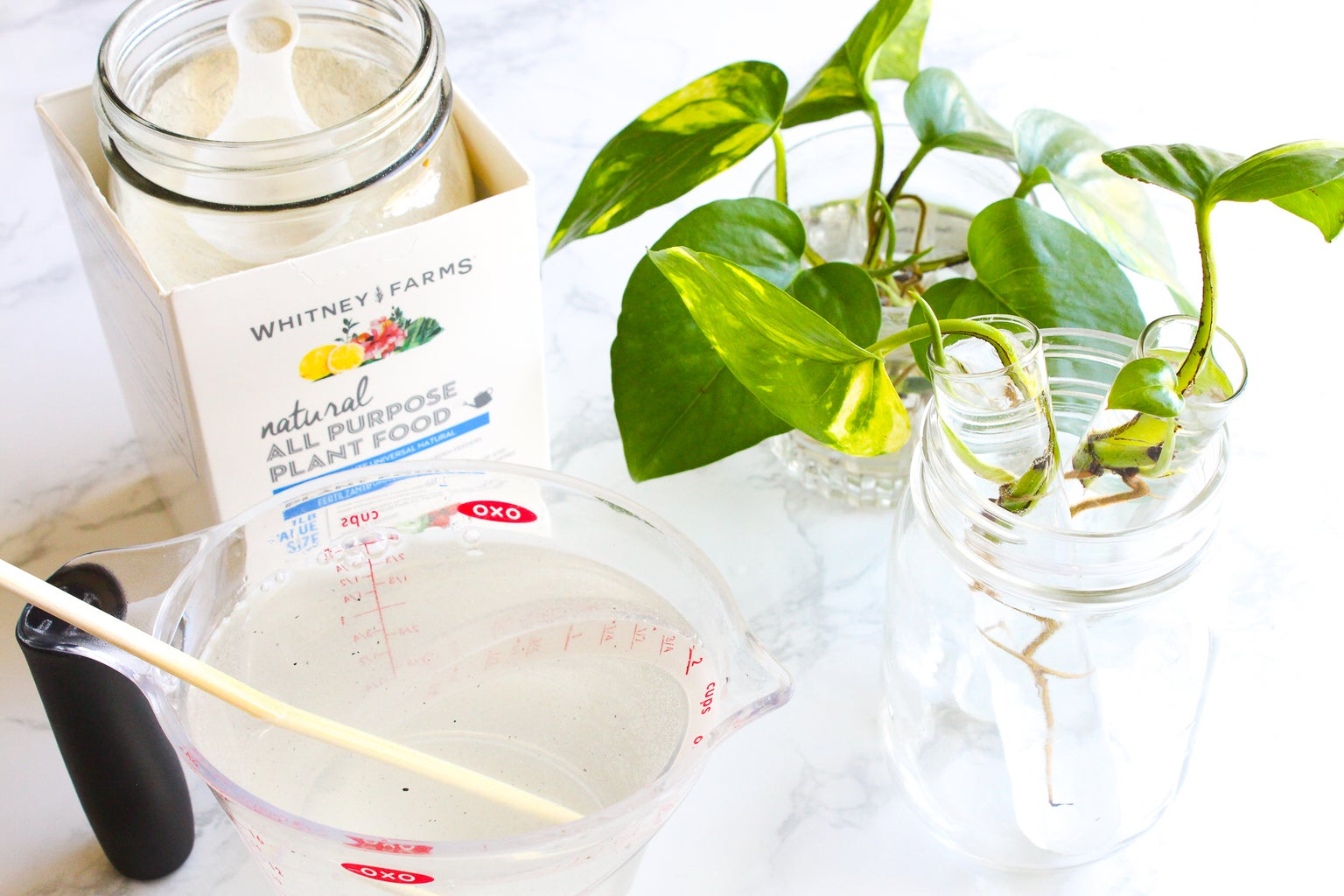 How to Keep a Pothos Alive in Water