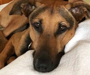 Homemade Big Dog Dog Food - for Sensitive Tummies