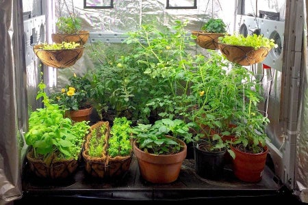 Grow Tent for Vegs at Home on Budget