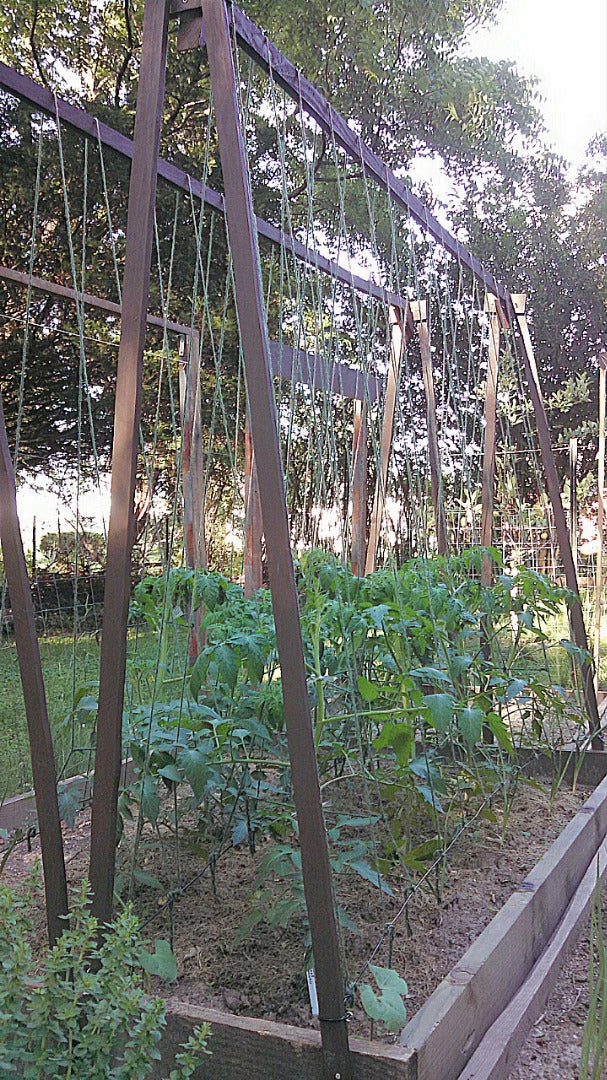 Plant Crops, Train Plants to the Trellis