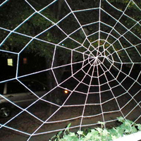 Giant Spiderweb
