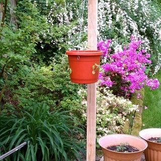 Home Made Topsy Turvy Planter.jpg