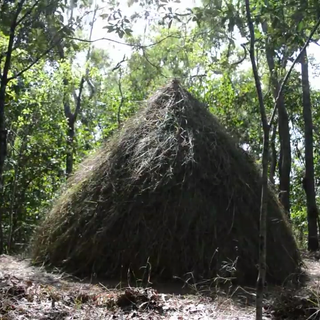 How to survive in the jungle - Grass hut.png