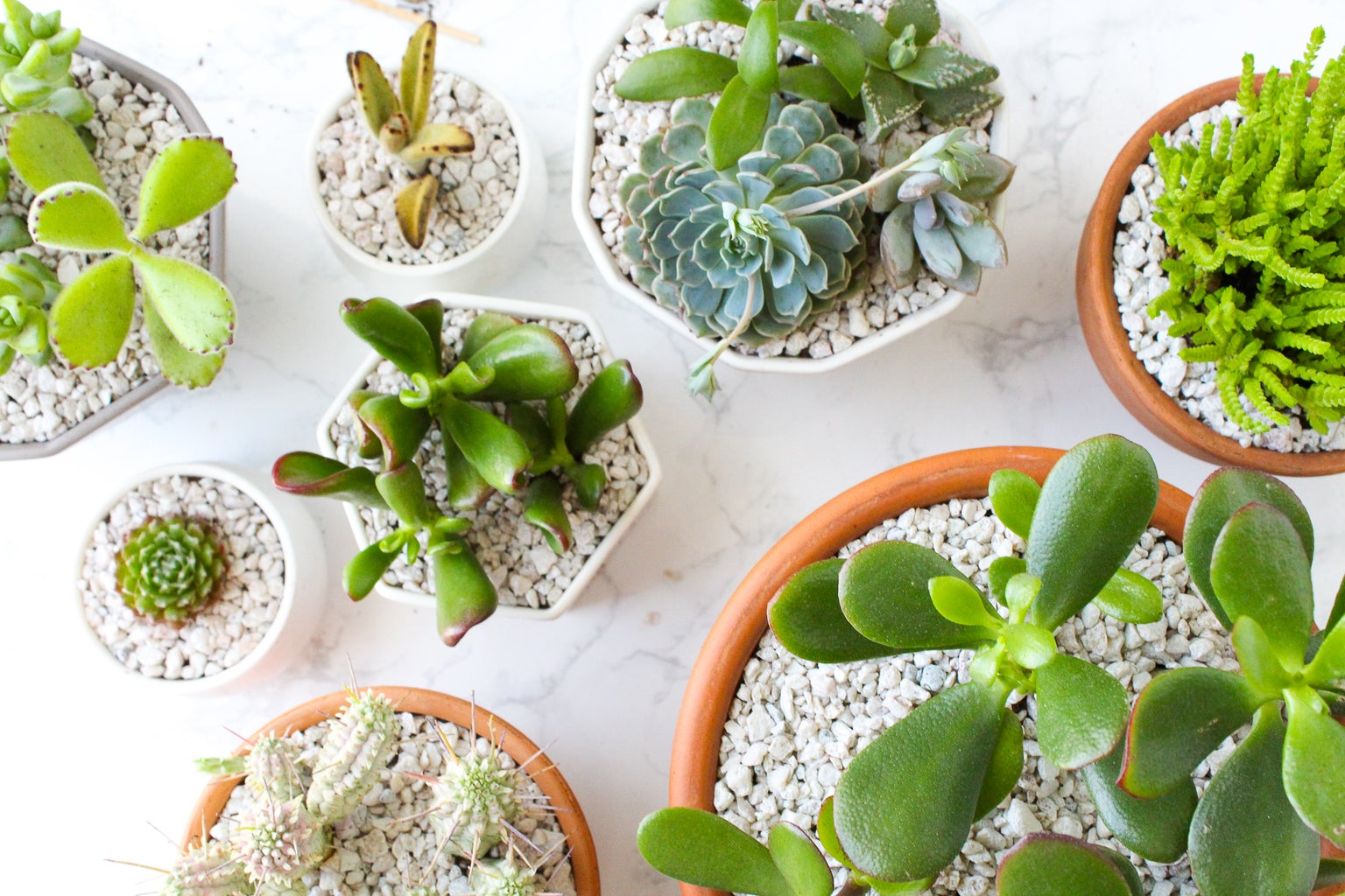 When to Use a Top Dressing in Your Pots