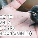 Easy Way to Tame a Bird As companion