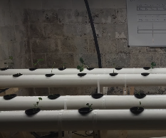 How to Build a Hydroponics Farm in Basement