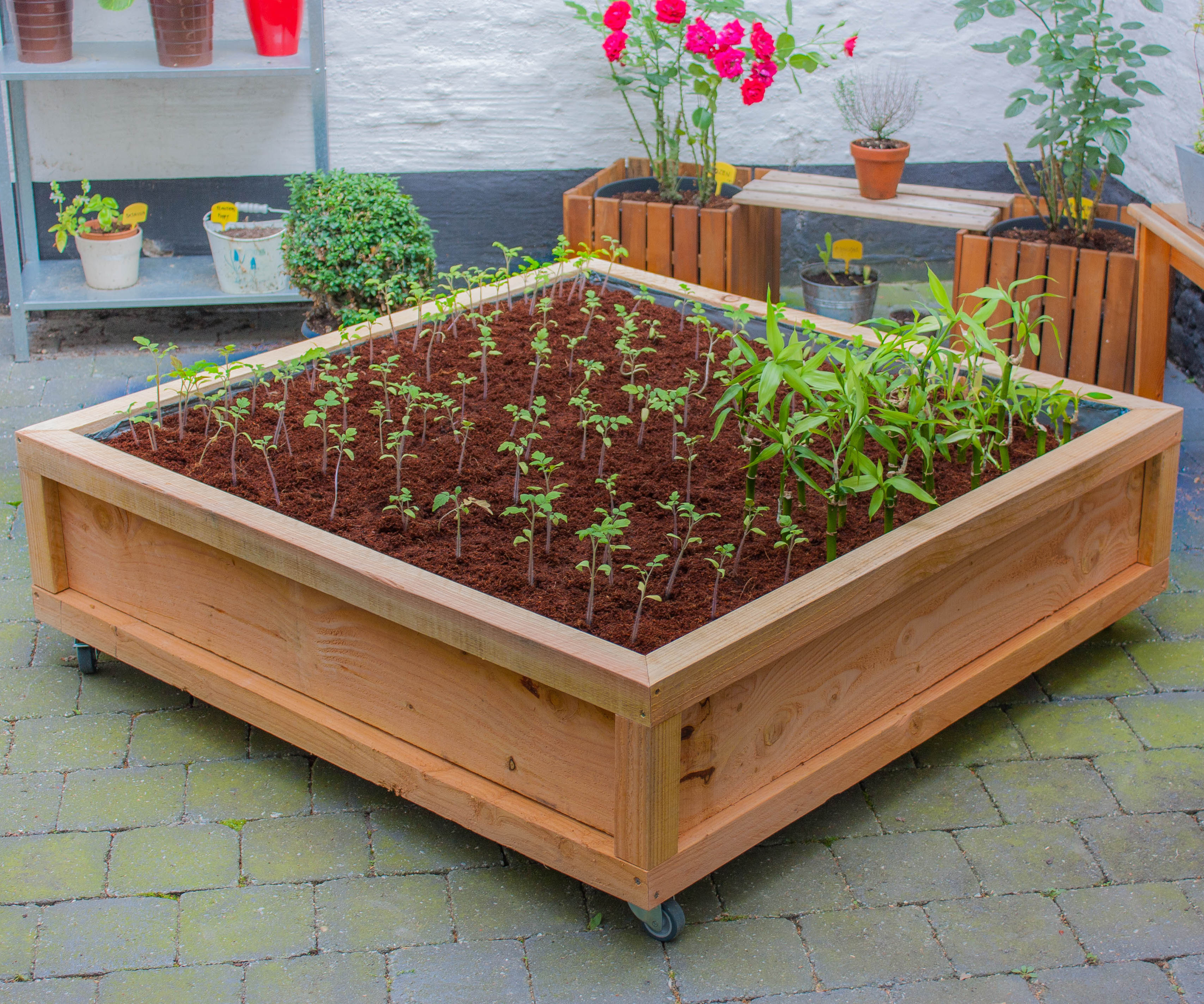 Square meter vegetable garden on wheels