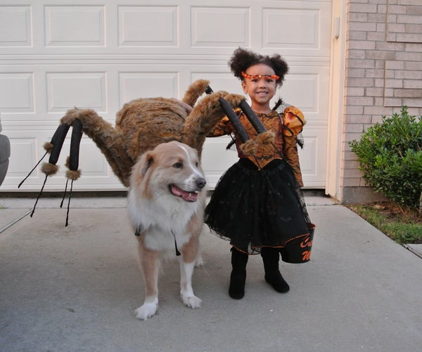The Spider and His Spider Princess