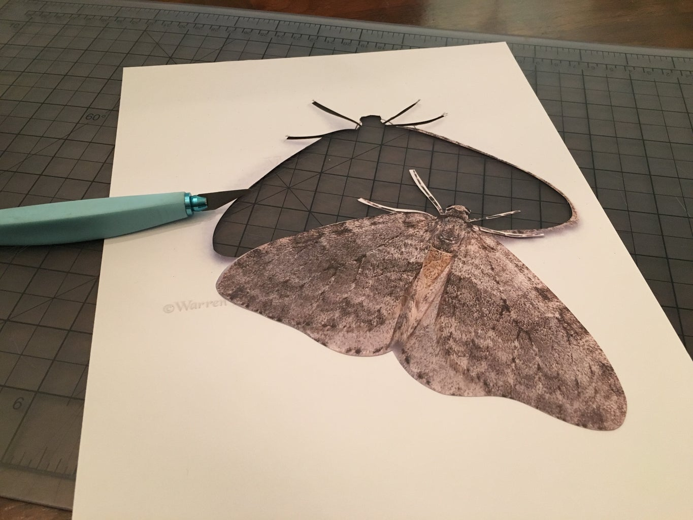 Making the Moths