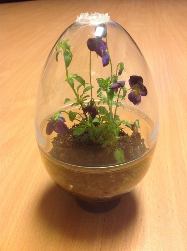 Used Chocolate Egg Container As Terrarium