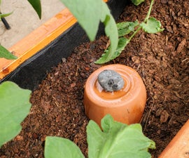 BEAT THE HEAT - on a Budget: DIY Self-Watering Olla Irrigation
