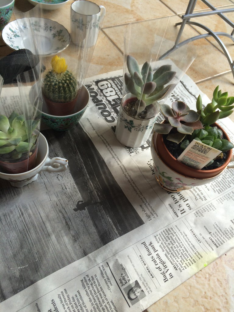 Decide Which Plant to Put in Which Tea Cup