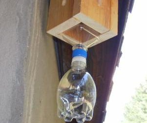 Carpenter Bee Trap, Small Version