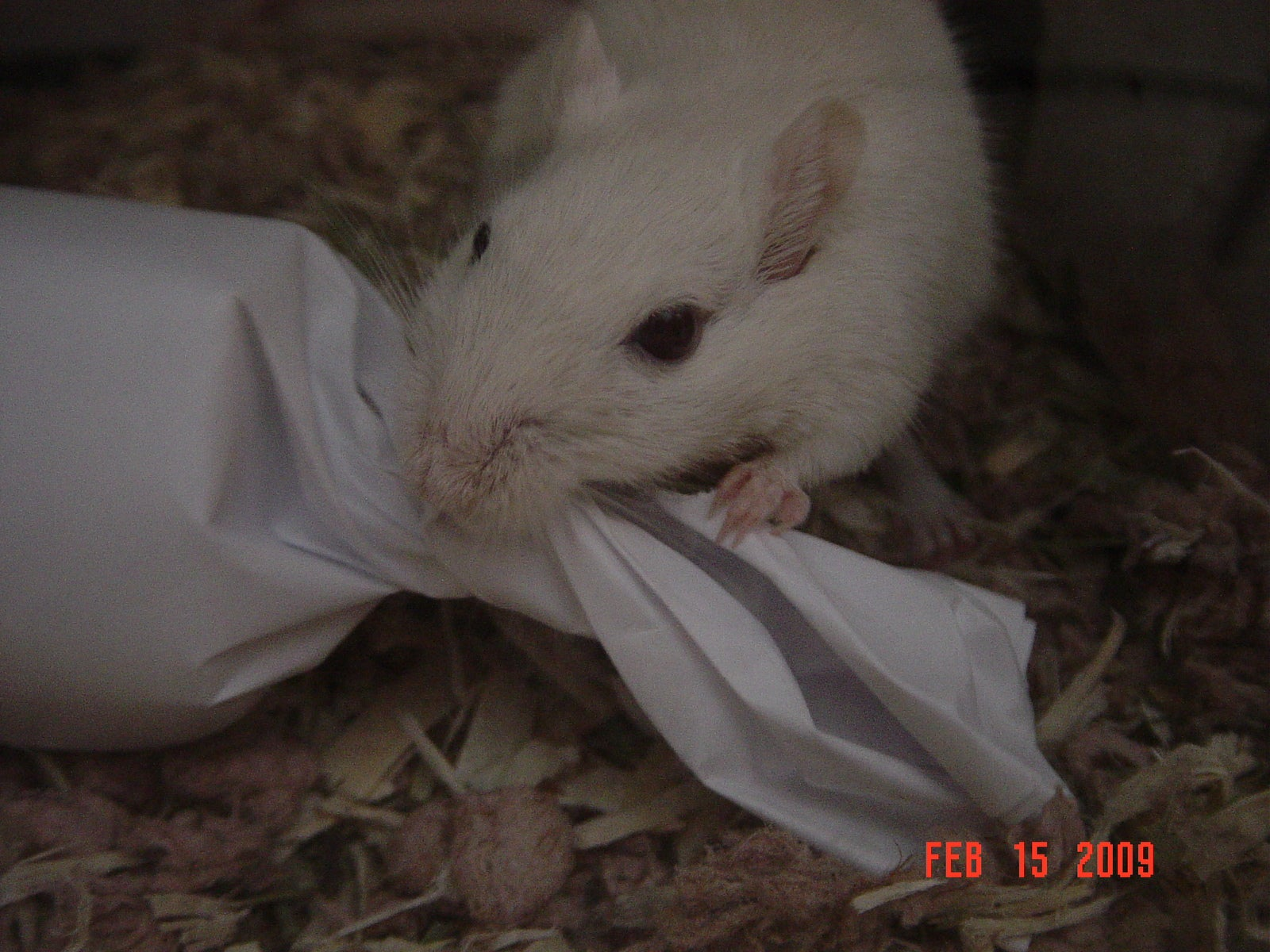 Easy To Make Gerbil Toy 5 Steps With Pictures Instructables