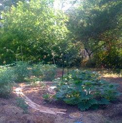 "Spiral Patterned "" Layer "" Garden"