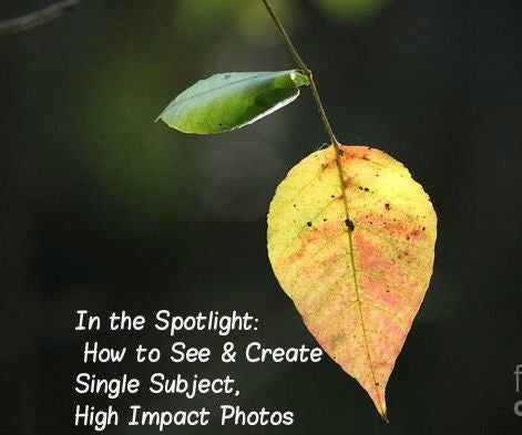 In the Spotlight: How to See & Create Single Subject, High Impact Photos