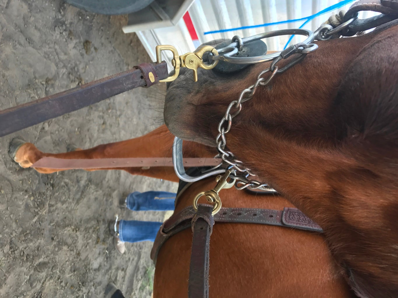 Bridle the Horse