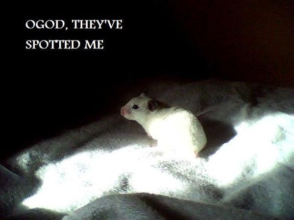 A Few Bits for Hamsters