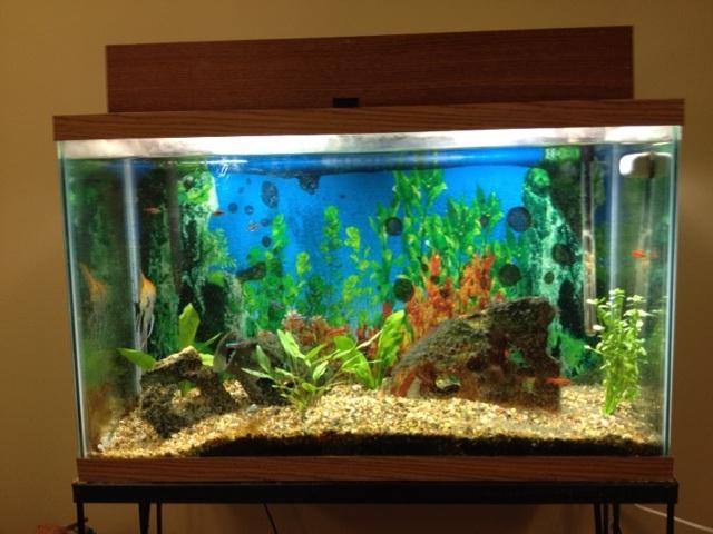 Aquarium Lights on Steroids - Using Giant CFL's for Better Light