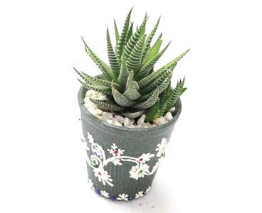 Plant the Succulent