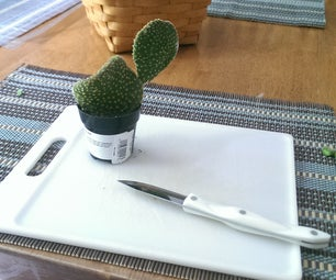 How to Propagate Cacti!!!!