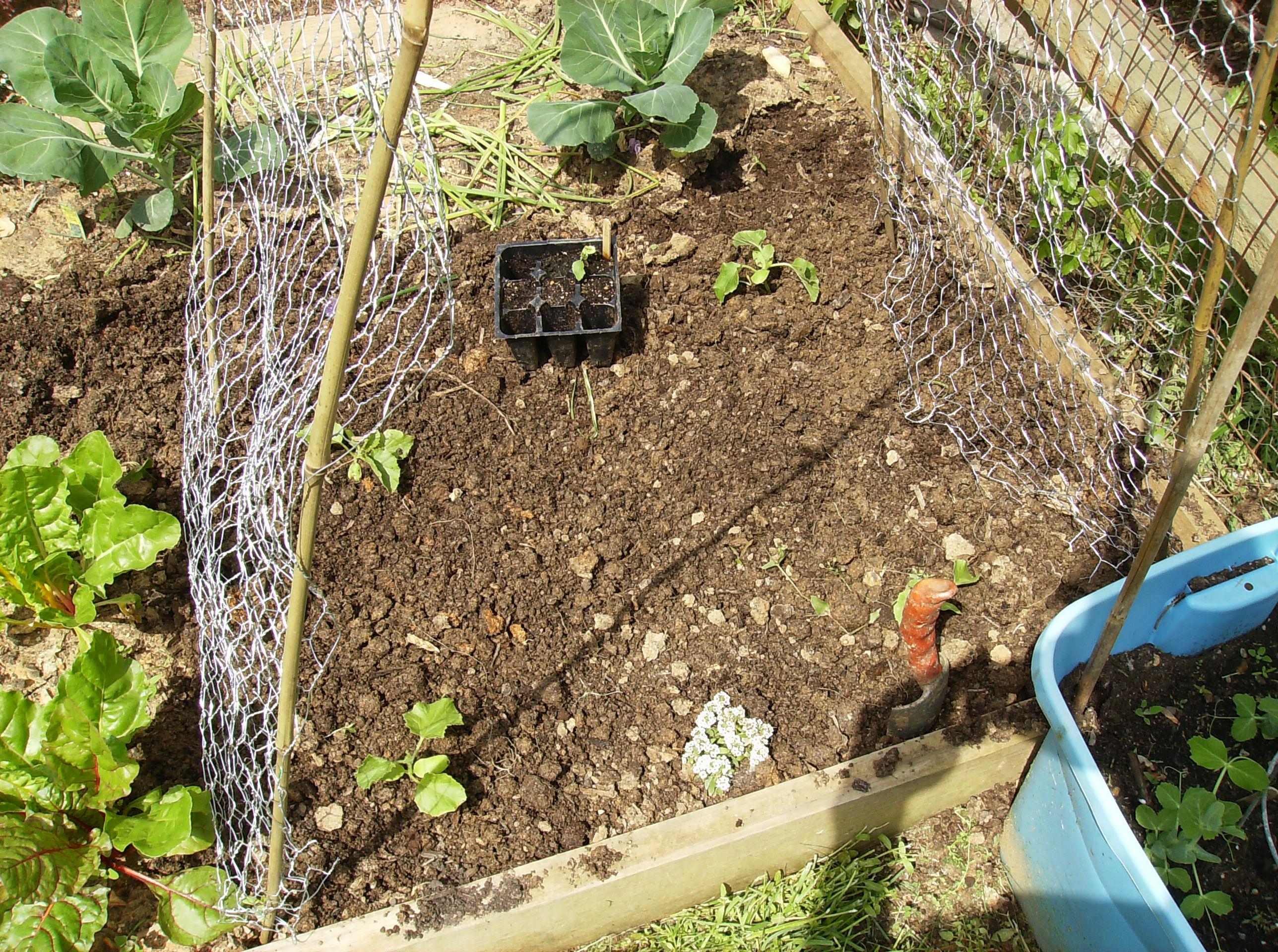 How to Build a Low Cost Vegetable Garden Trellis