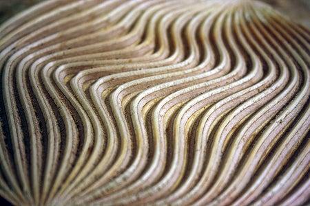 Example 2: Curvy Lines