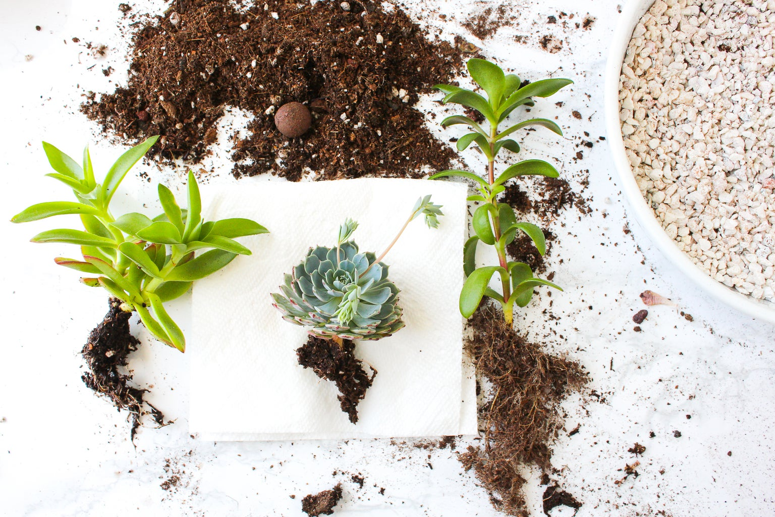 What to Do With Roots When Transplanting a Plant
