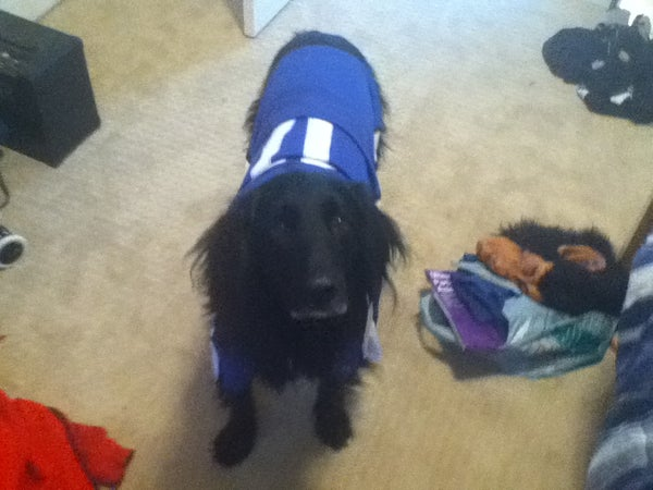 $2 (Air Bud) Dog Costume