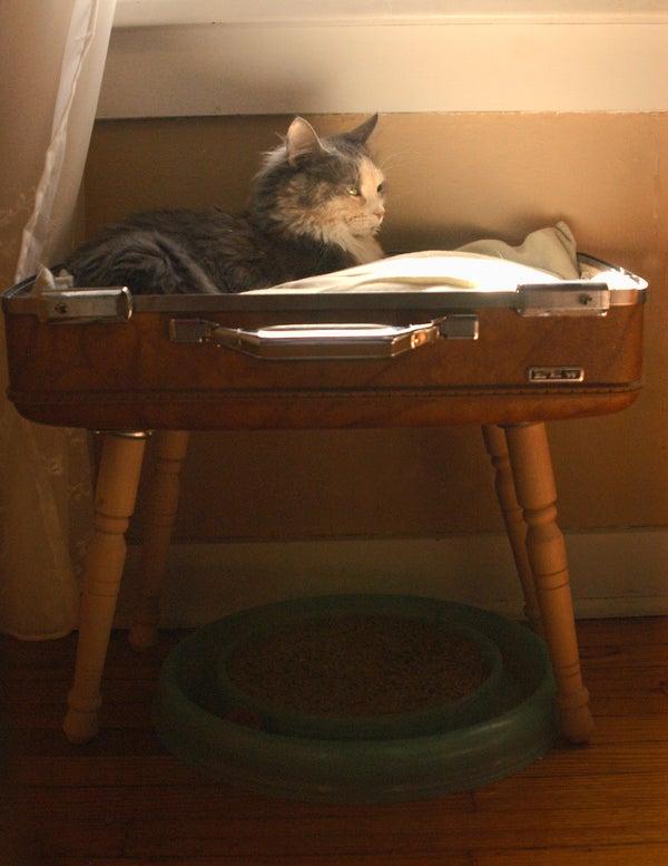 Stylish & Simple Suitcase Pet Bed