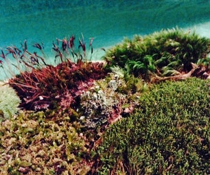 Easy Moss Garden