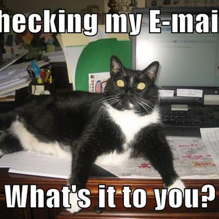 Boots checking his e-mails.png