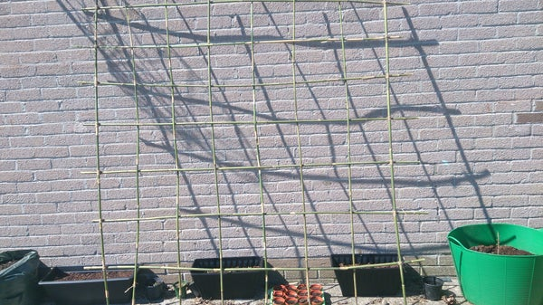 Quirky and Easy Bamboo Trellis