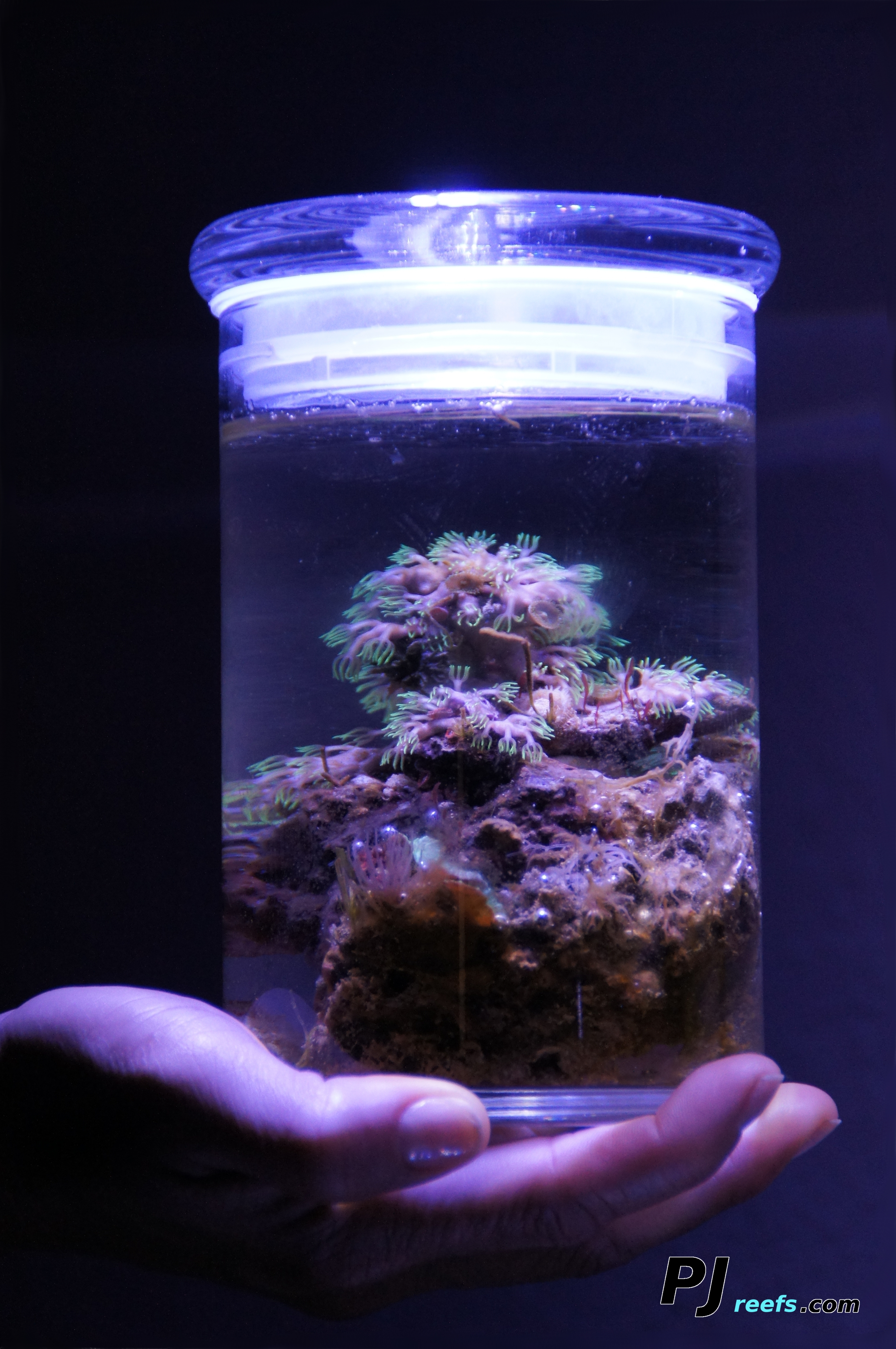 A low maintenance/self sustaining Saltwater ecosystem