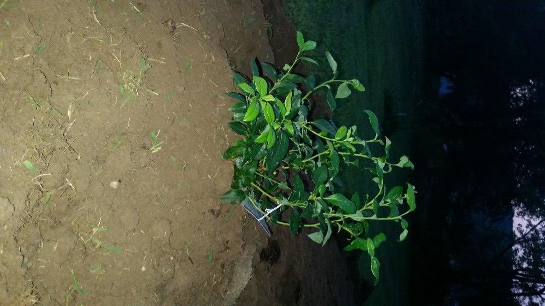 Plant the Bush