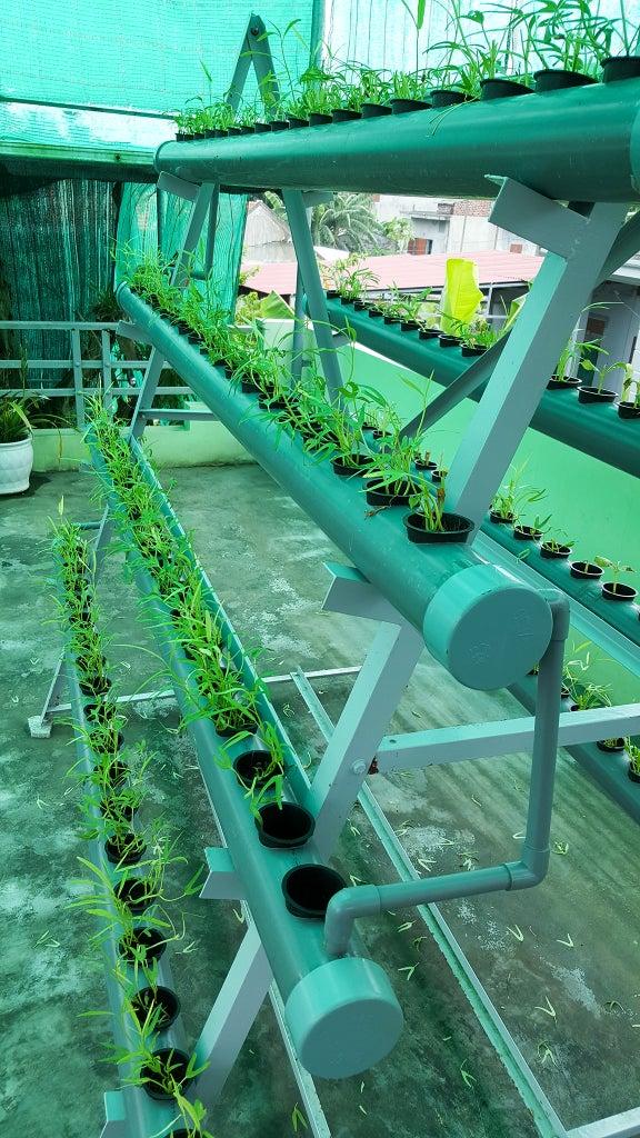 Planting Trees According to New Methods