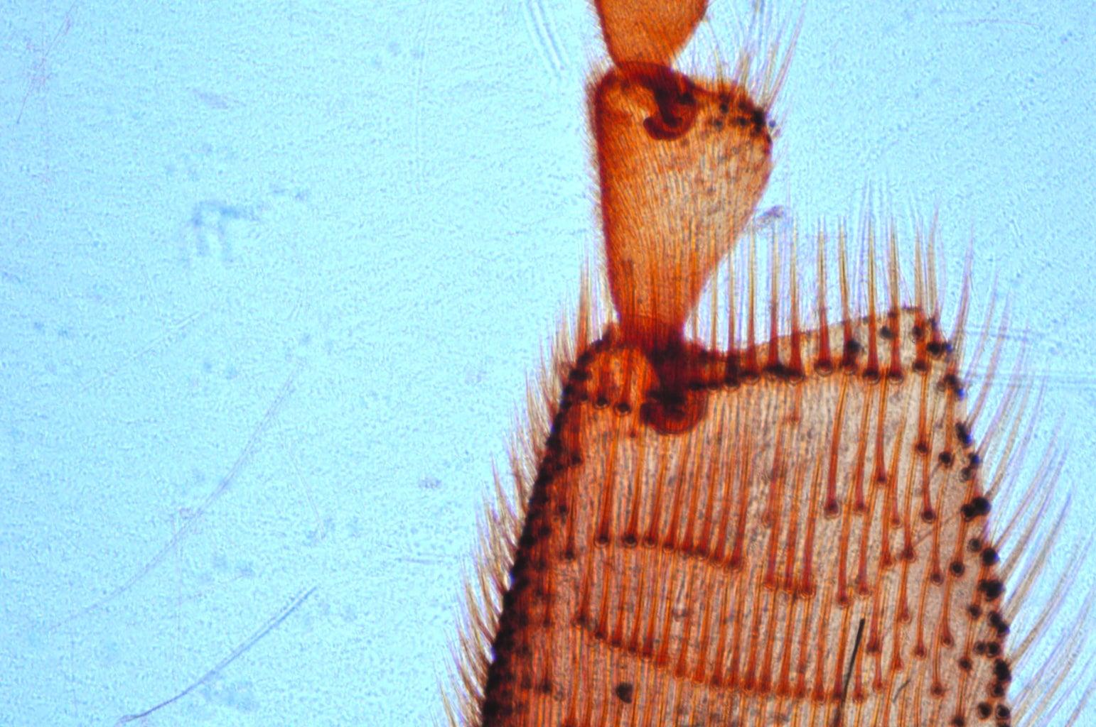Low-cost Fluorescence and Brightfield Microscopes