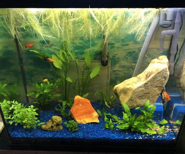 Low Maintenance Planted Aquarium