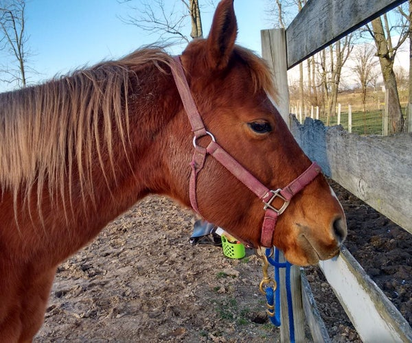 Tacking a Horse