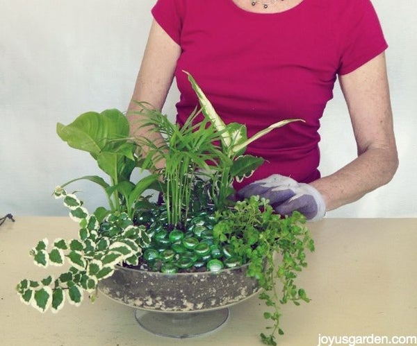 How to Make a Dish Garden Everyone Will Love