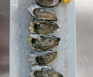 How to Open Oysters