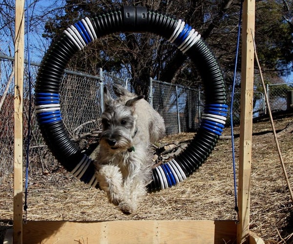 Dog Agility Tire Jump From Pallet