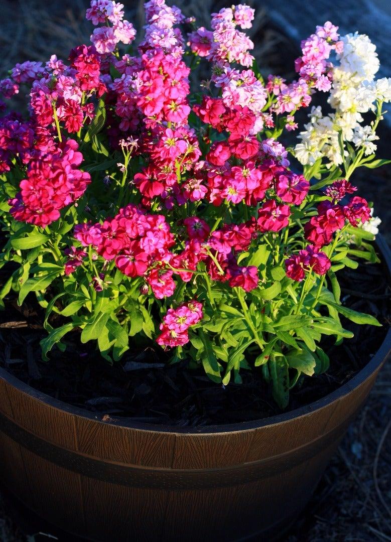 Simple Gardening Hack: Save $ on Potting Soil
