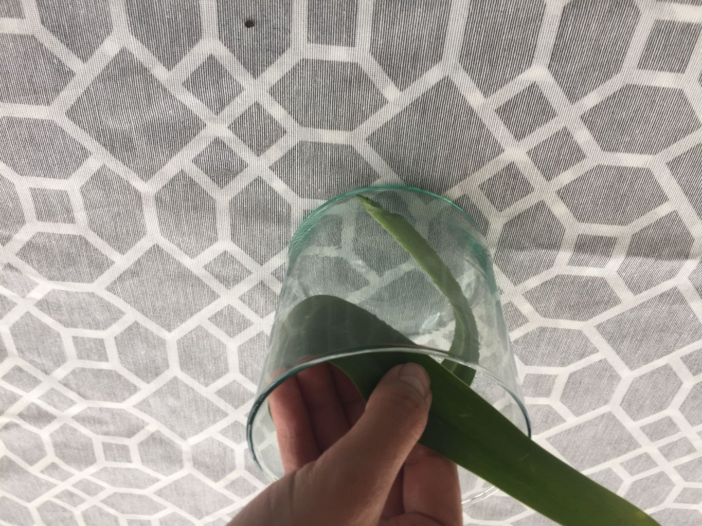 Put the Plants in the Vase