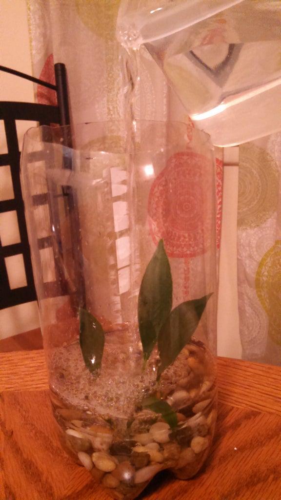 Bottle 1- Aqua Layer